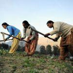 Hvem er den indiske bonden?