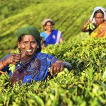 WTO-regelverket opprettholder sult og fattigdom