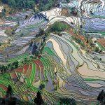Ein økologisk politisk økonomi