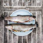 Ny stortingsmelding om fiskeripolitikk